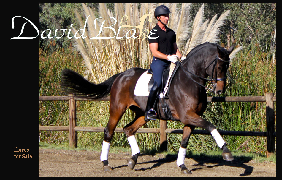 David Blake Dressage Training